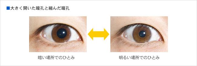 大きく開いた瞳孔と縮んだ瞳孔